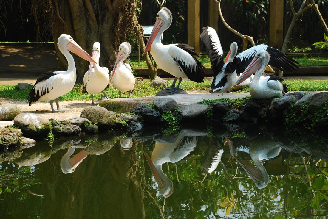 Парки птиц и рептилий