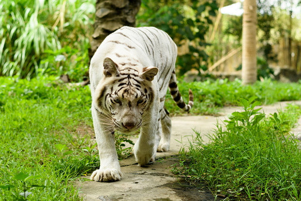 Бали Сафари парк