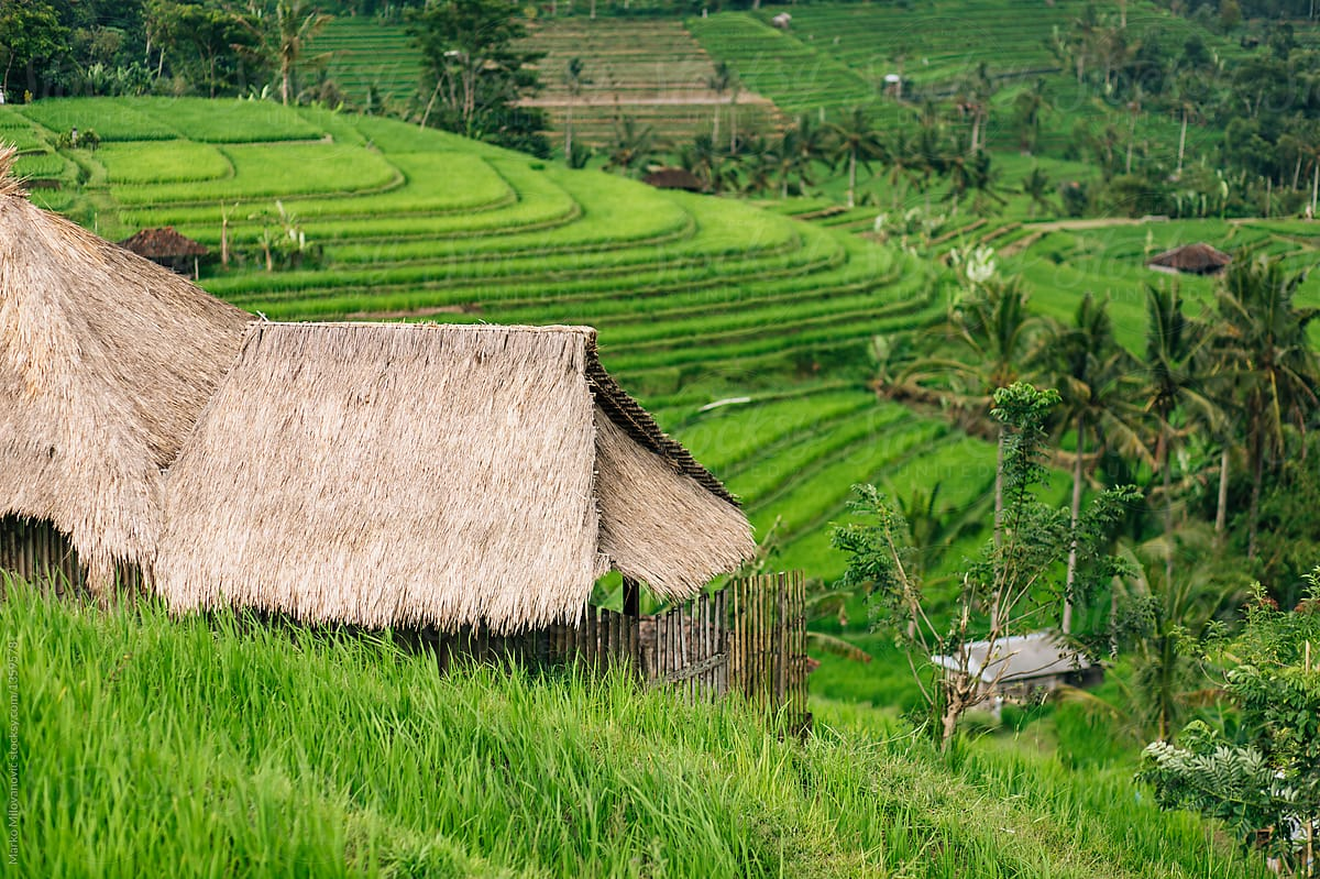 Рисовые террасы Джатилувих
